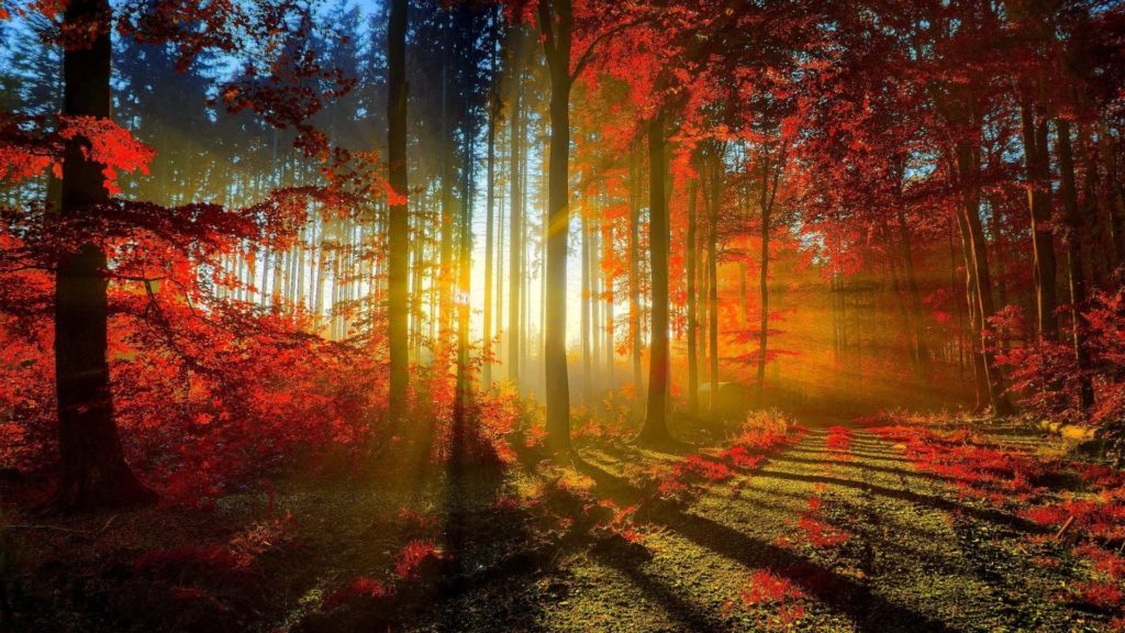10 New 1920X1080 Wallpaper Beautiful FULL HD 1920×1080 For PC Background 2021 free download 100 hdq beautiful nature wallpapers desktop 4k hdq pictures 1024x576
