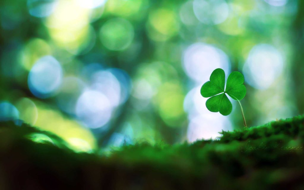 10 Latest 4 Leaf Clover Wallpapers FULL HD 1080p For PC Background 2018 free download 1000 images about four leaf clovers on pinterest smiley faces 1024x640