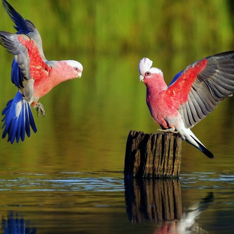 10 Most Popular Birds Full Hd Wallpapers FULL HD 1920×1080 For PC Desktop 2020 free download 135 parrot hd wallpapers background images wallpaper abyss 800x800
