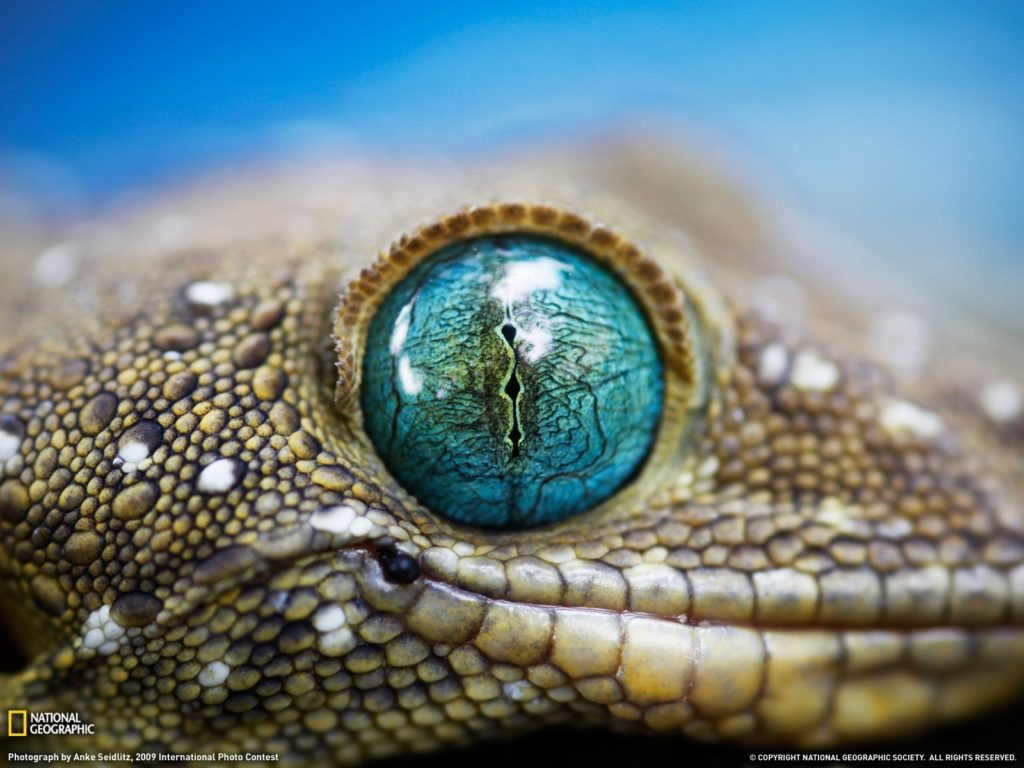 10 New National Geographic Wallpapers High Resolution FULL HD 1080p For PC Background 2020 free download 16019 national geographic wallpaper download walops 1024x768