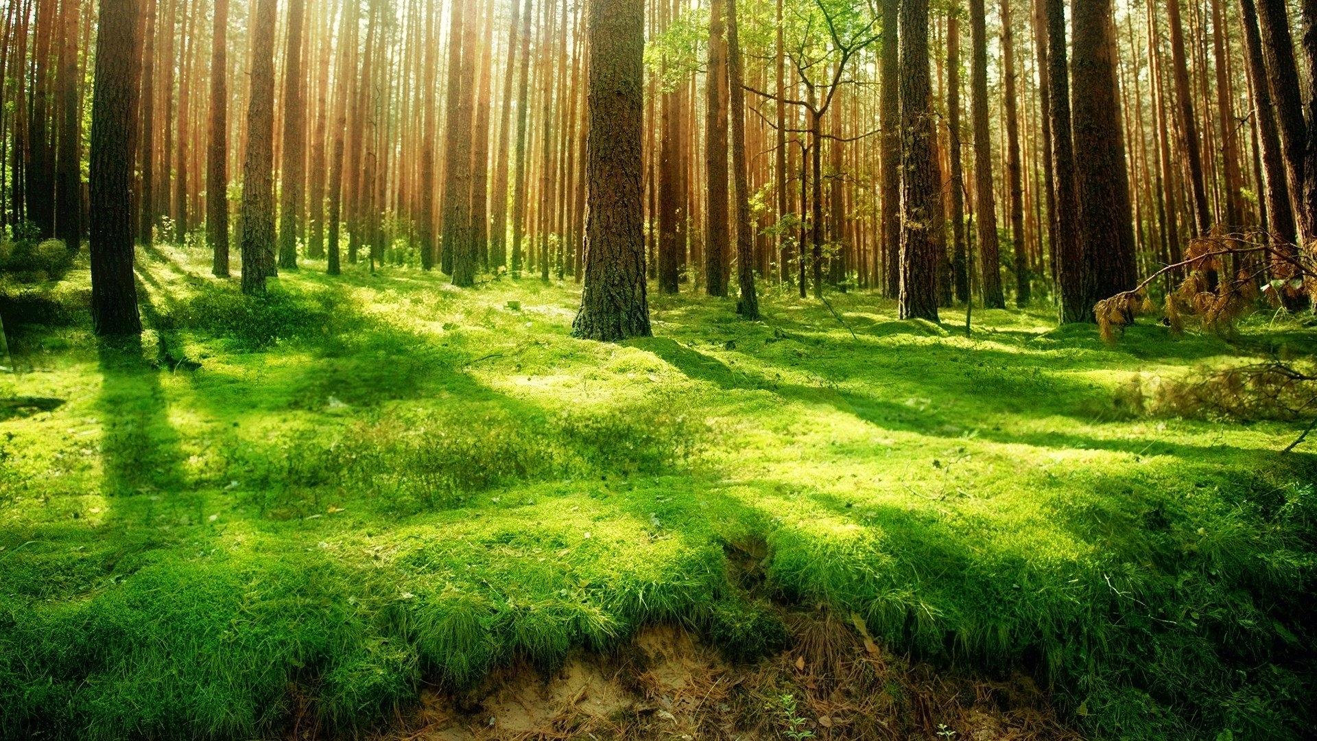 1763 forest hd wallpapers | background images - wallpaper abyss