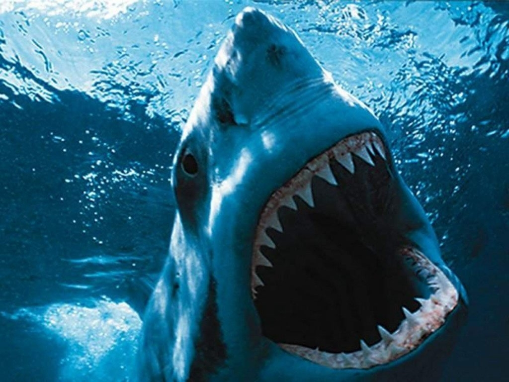 192 shark hd wallpapers | background images - wallpaper abyss