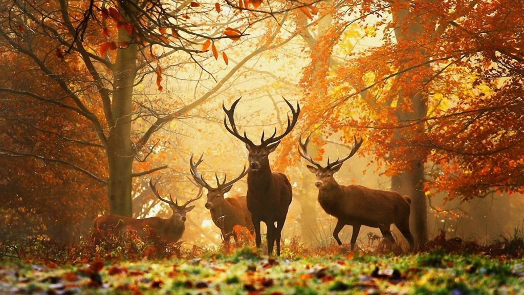 10 Best High Definition Autumn Wallpaper FULL HD 1080p For PC Background 2020 free download 1920x1080 hd autumn wallpapers 61 images 1024x576
