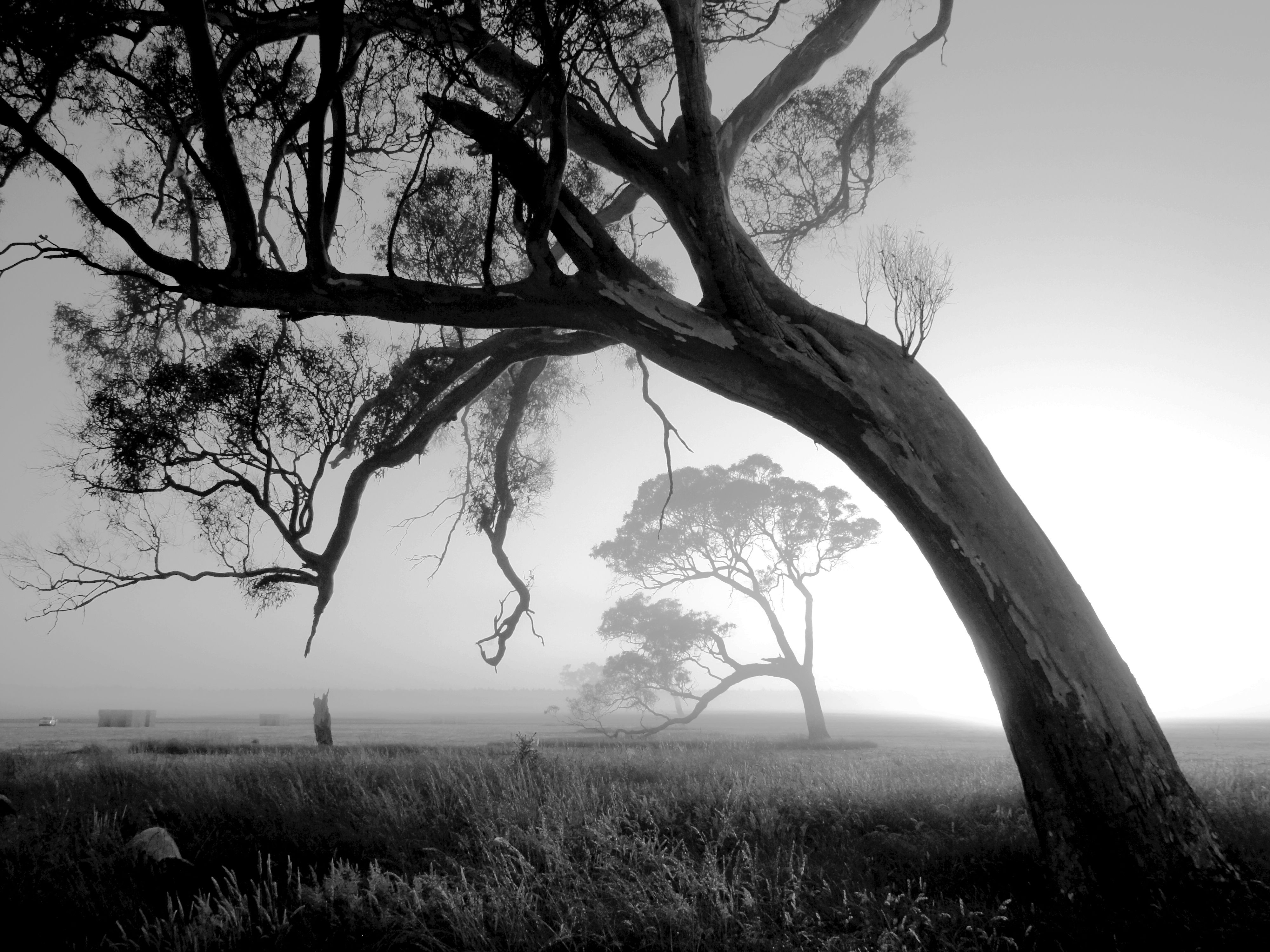20 beautiful black and white nature photography | good work project