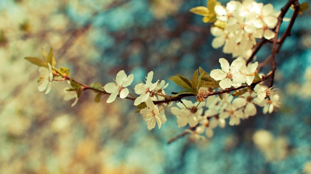 10 Latest Vintage Spring Desktop Background FULL HD 1080p For PC Desktop 2020 free download 20 vintage wallpapers for retro look vintage flowers wallpaper 1024x576