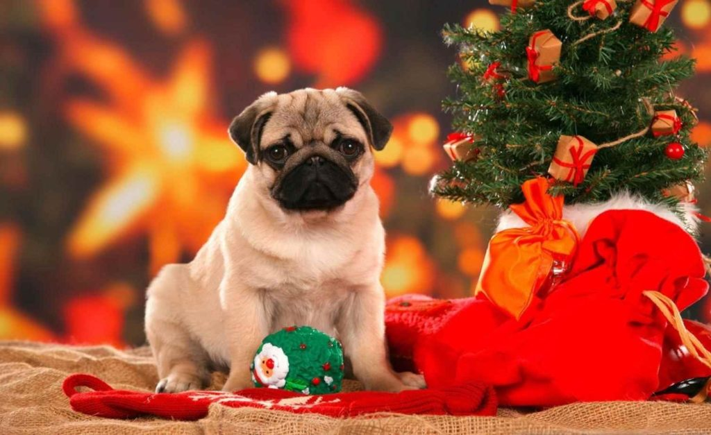 10 New Cute Animal Christmas Wallpaper FULL HD 1080p For PC Desktop 2020 free download 2017 christmas wallpapers cute christmas wallpapers cute 2017 1024x627