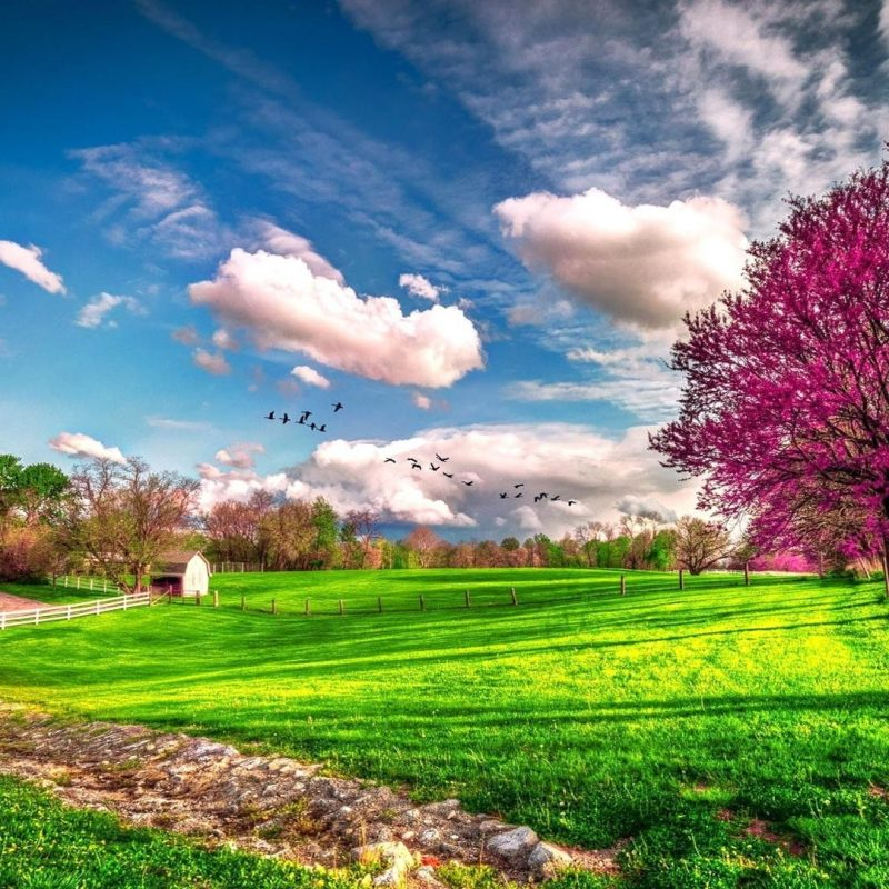 10 New Computer Backgrounds Nature Spring FULL HD 1080p For PC Desktop 2018 free download 2026 spring desktop backgrounds 800x800