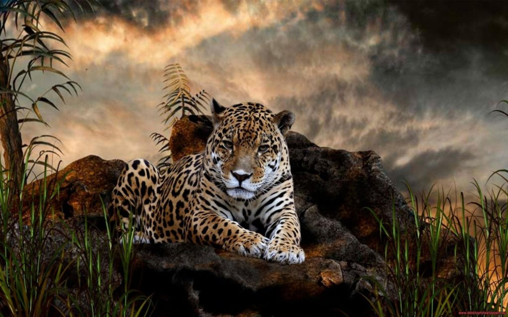 10 Top Wild Animal Wall Paper FULL HD 1080p For PC Desktop 2020 free download 204 jaguar hd wallpapers background images wallpaper abyss 1024x640