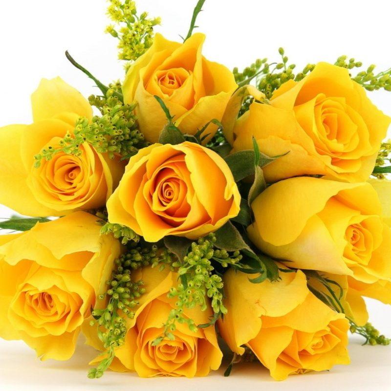 10 New Pics Of Yellow Rose Full Hd 1920 1080 For Pc Desktop