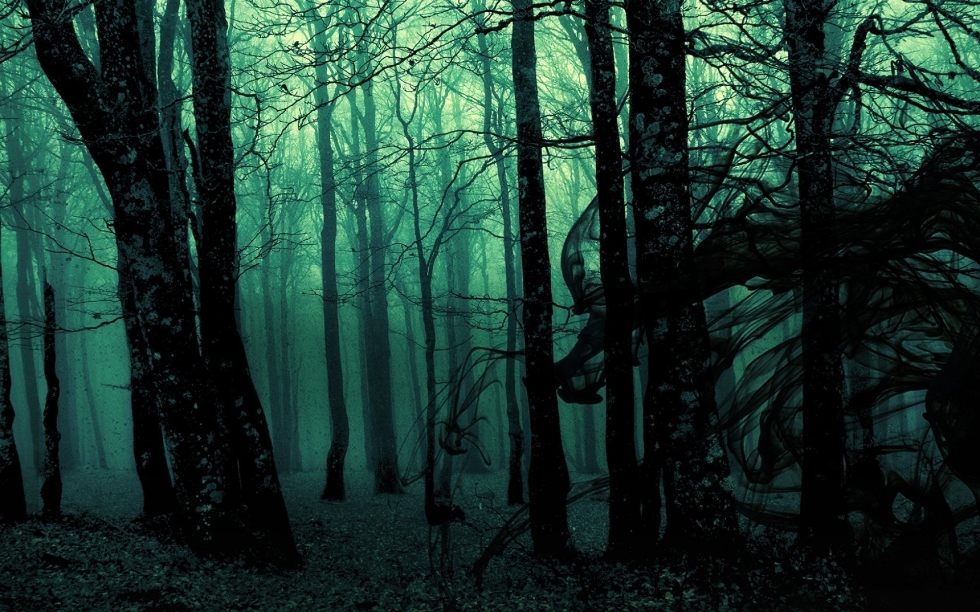 23 forest hd wallpapers | background images - wallpaper abyss