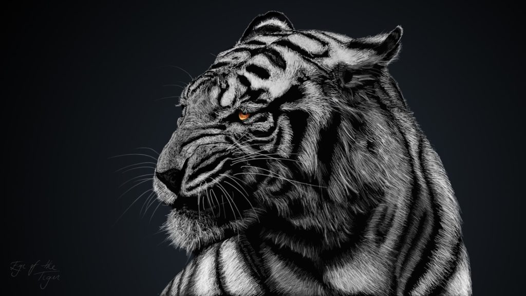10 Top Black And White Tiger Wallpaper FULL HD 1920×1080 For PC Background 2020 free download 234 white tiger hd wallpapers background images wallpaper abyss 1024x576