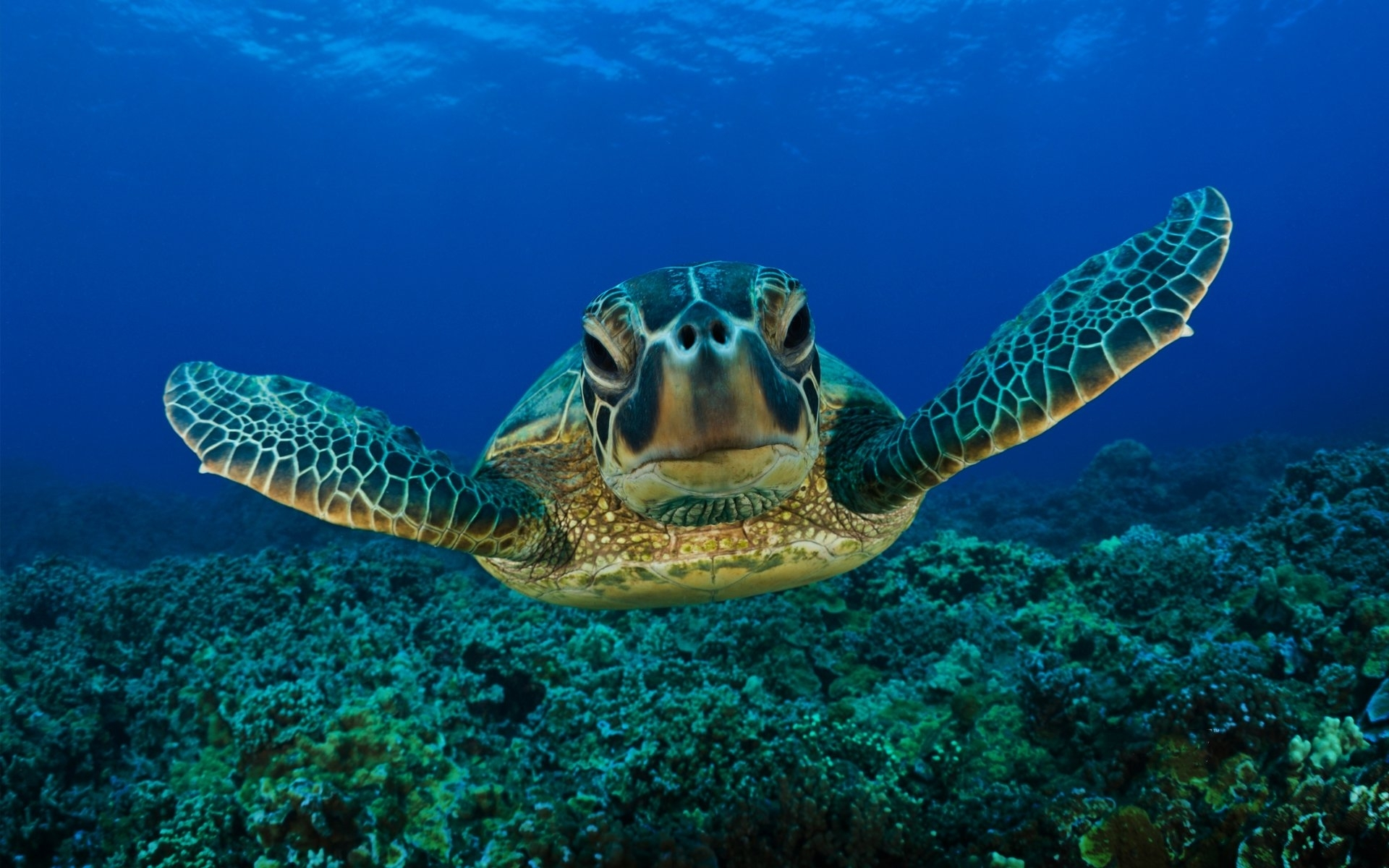 245 turtle hd wallpapers | background images - wallpaper abyss