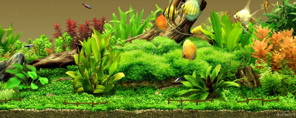 10 Most Popular Pictures Of Aquarium Backgrounds FULL HD 1080p For PC Desktop 2018 free download 25 aquarium backgrounds wallpapers images pictures design 1024x410