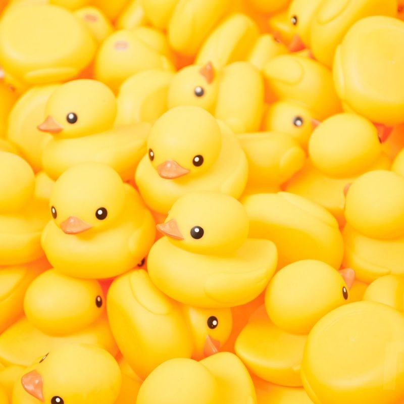 10 Top Rubber Duck Wall Paper FULL HD 1080p For PC Background 2020 free download 25 best rubber ducky wallpapers in high quality odile gethins 800x800