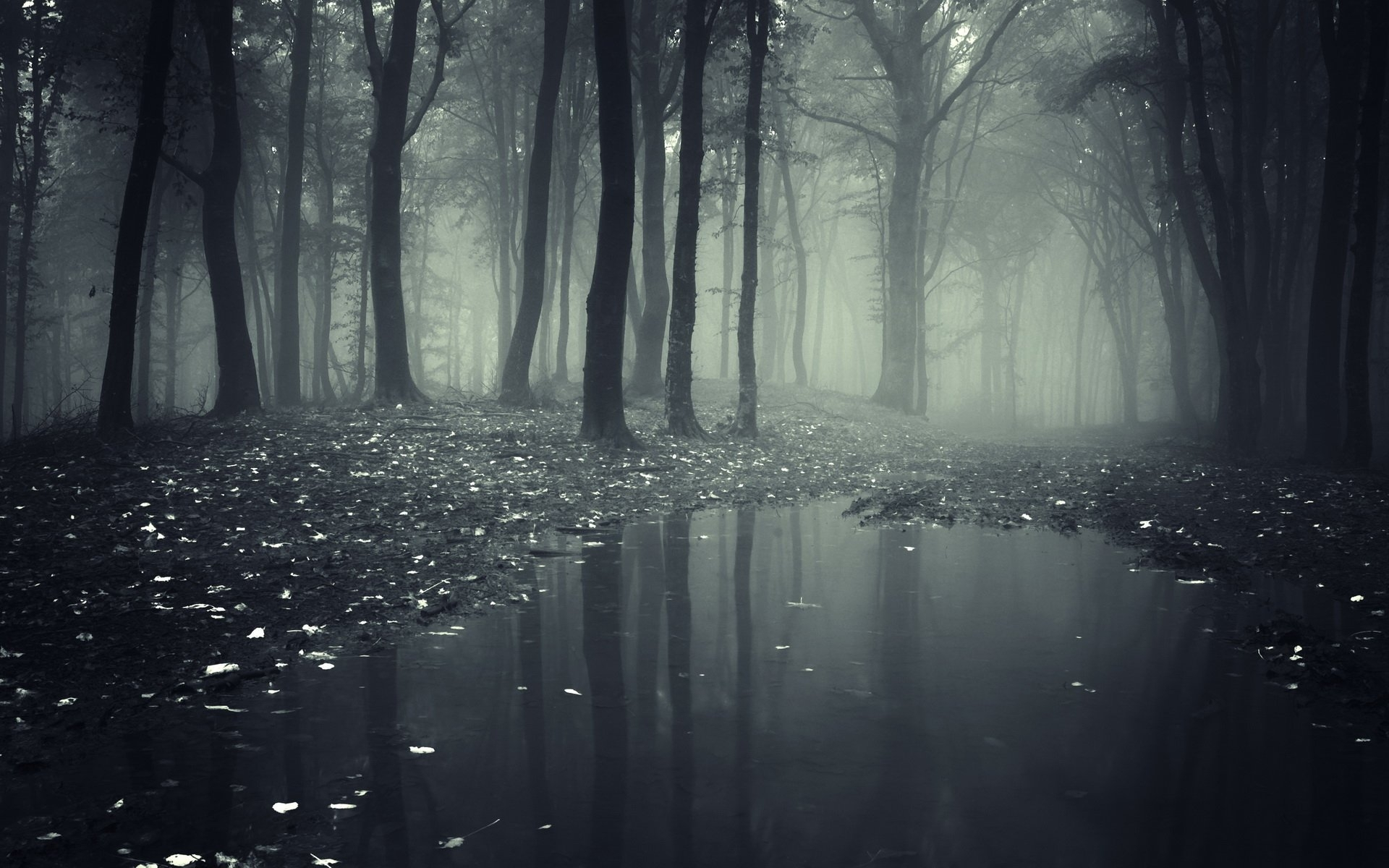 25 forest hd wallpapers | background images - wallpaper abyss