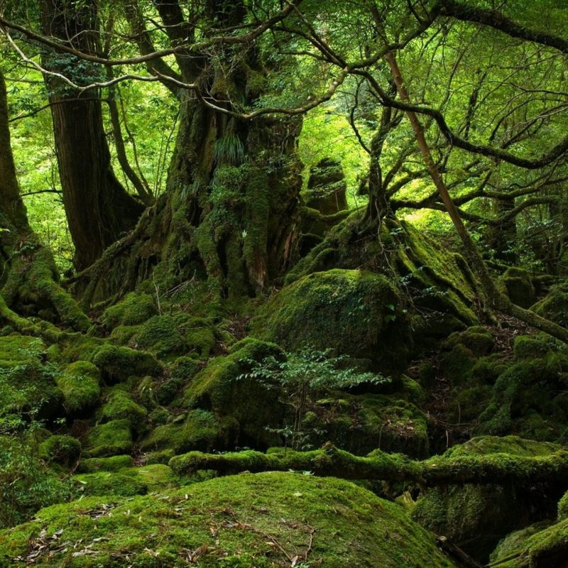 10 Most Popular Dark Green Forest Wallpaper FULL HD 1080p For PC Background 2020 free download 2560x1440 wallpaper trees wood jungle moss stones green 800x800
