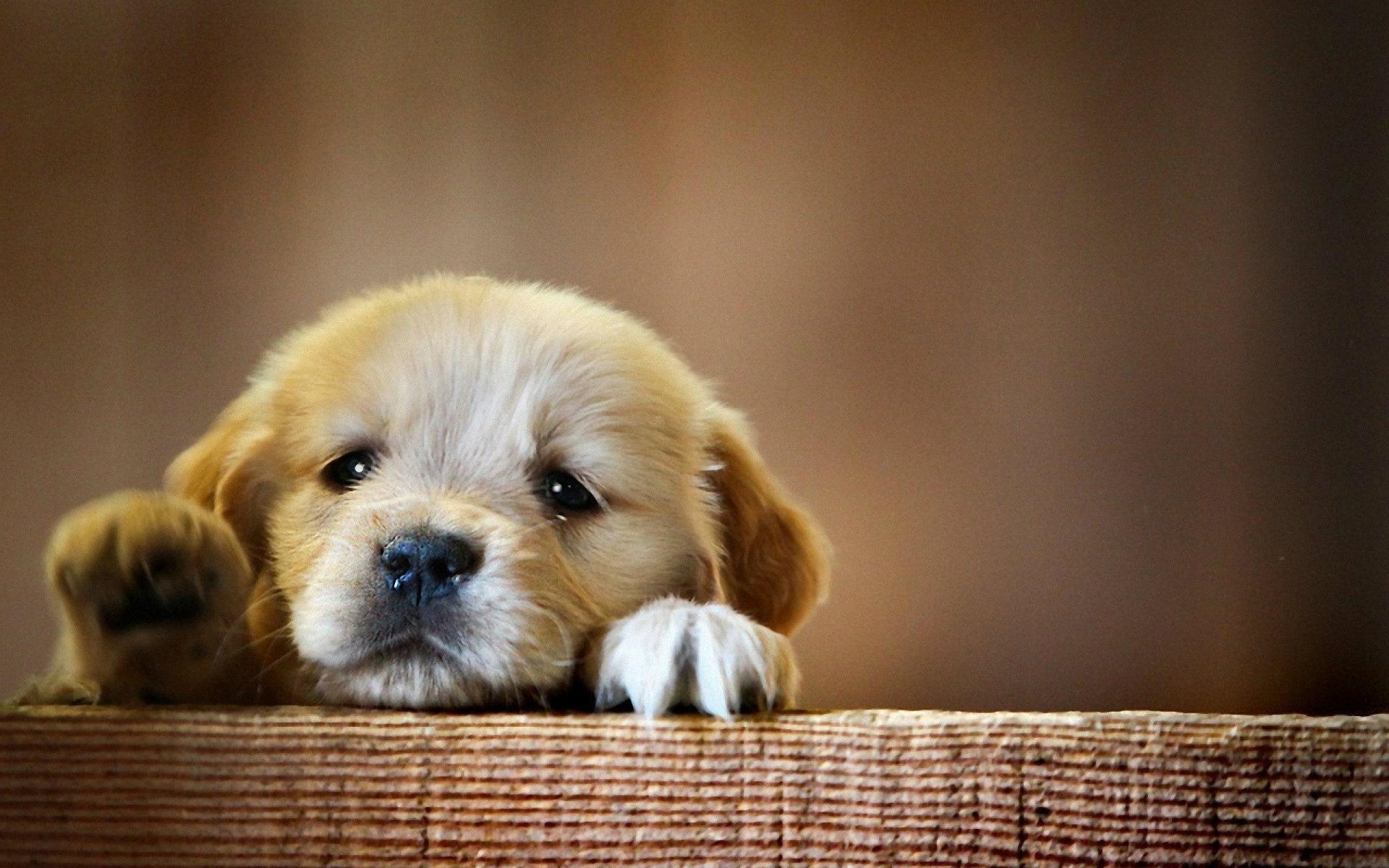 2750 cute dog wallpapers for desktop