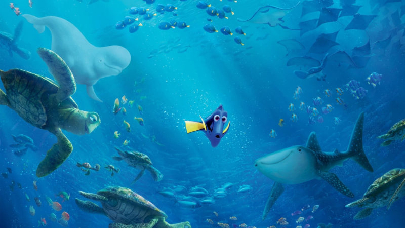 10 Best Finding Dory Ocean Background FULL HD 1920×1080 For PC Background 2018 free download 29 finding dory hd wallpapers background images wallpaper abyss 1 800x450
