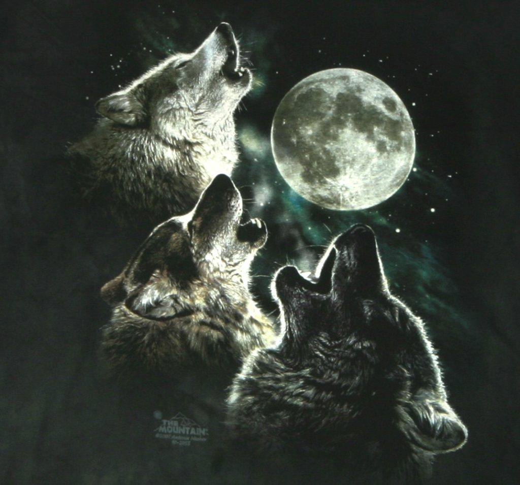 10 Latest Pics Of Wolf Howling At The Moon FULL HD 1920×1080 For PC Desktop 2018 free download 3 wolves howling at the moon album on imgur 1024x955