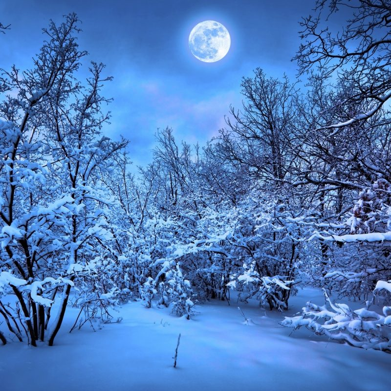 10 Top Snowy Dark Forest Wallpaper FULL HD 1920×1080 For PC Background 2018 free download 3288 snowy night forest wallpaper walops 800x800