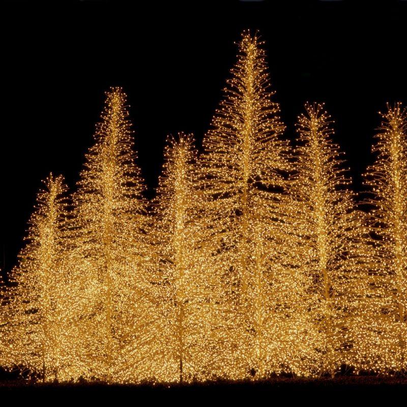 10 Latest Christmas Lights Widescreen Desktop Wallpaper FULL HD 1920×1080 For PC Desktop 2018 free download 3468 christmas lights widescreen desktop wallpaper walops 1 800x800