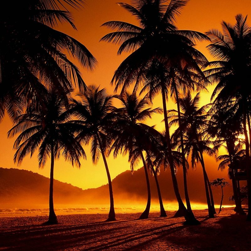 10 Latest Palm Tree Sunset Wallpaper FULL HD 1920×1080 For PC Desktop 2018 free download 35 palm tree sunset wallpaper 800x800