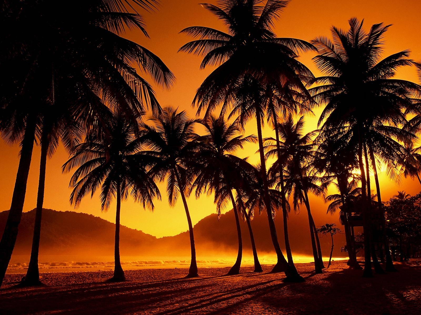 35+ palm tree sunset wallpaper