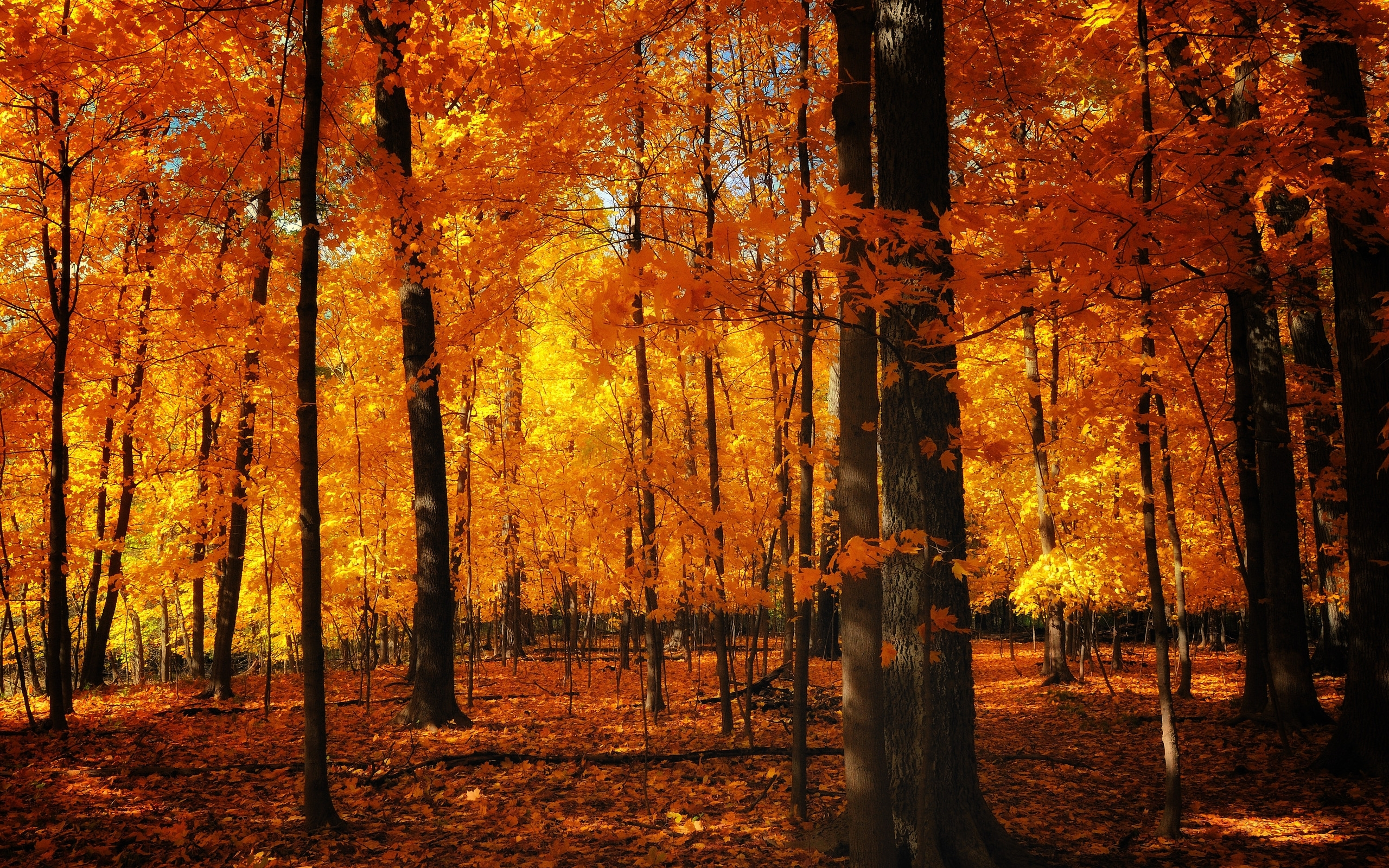37 desktop images of autumn forest | autumn forest wallpapers
