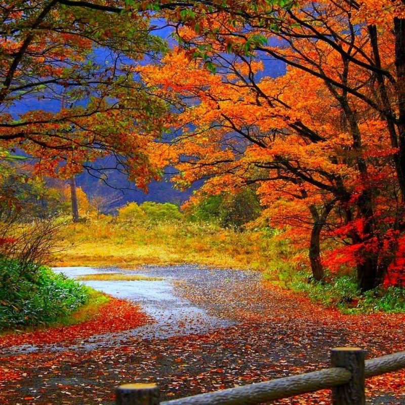 10 New Pretty Fall Backgrounds Desktops FULL HD 1080p For PC Background 2018 free download 37 desktop images of autumn forest autumn forest wallpapers 800x800