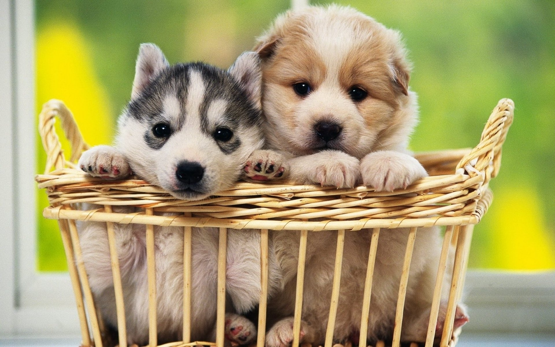 3742 dog hd wallpapers   background images - wallpaper abyss