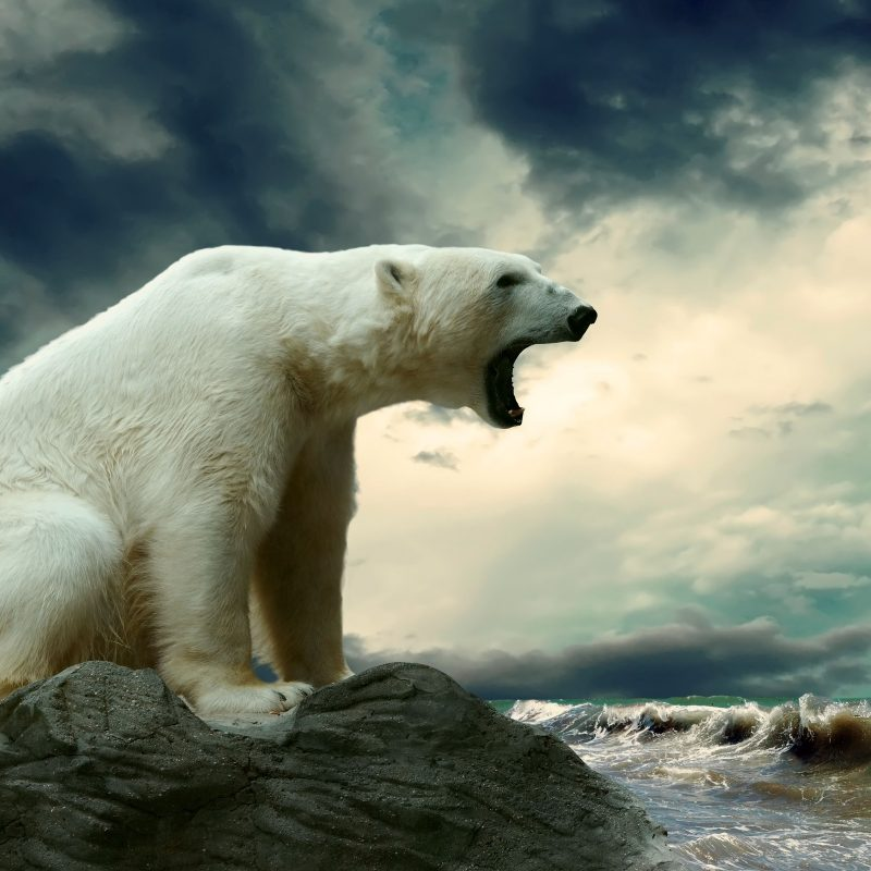 10 Best Polar Bear Desktop Wallpaper FULL HD 1920×1080 For PC Background 2018 free download 386 polar bear hd wallpapers background images wallpaper abyss 800x800