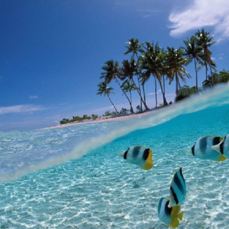 10 New Tropical Pictures Free Download FULL HD 1080p For PC Background 2020 free download 3d moving wallpaper 3d fish wallpaper download the free tropical 800x800