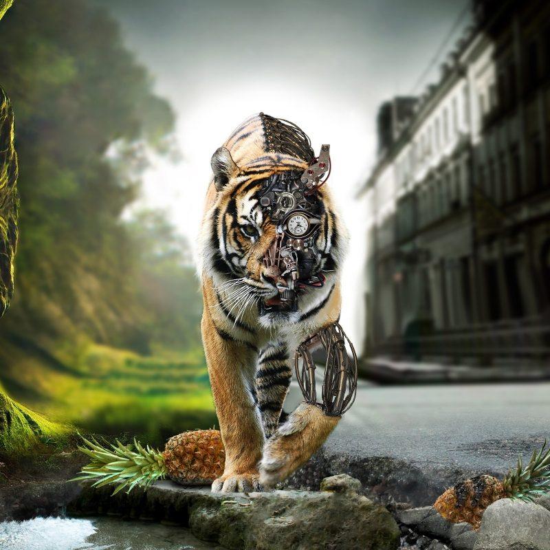 10 Best Hd Wallpaper Widescreen 1080P FULL HD 1080p For PC Desktop 2018 free download 3d tiger bionic hd wallpaper widescreen 1080p download download hd 800x800