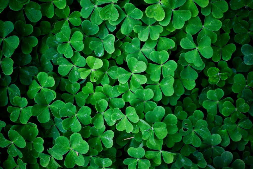 10 Latest 4 Leaf Clover Wallpapers FULL HD 1080p For PC Background 2018 free download 4 leaf clover wallpaper 46 images 1024x683
