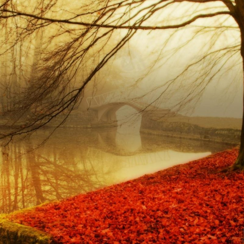 10 Most Popular Autumn Hd Wallpapers 1080P FULL HD 1080p For PC Desktop 2020 free download 40 autumn wallpapers hd autumn wallpapers and photos view hd 1 800x800