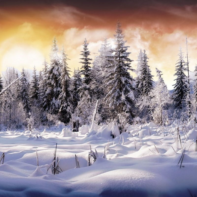 10 Top Snow Pictures For Wallpaper FULL HD 1920×1080 For PC Desktop 2020 free download 4151 snow hd wallpapers background images wallpaper abyss 800x800