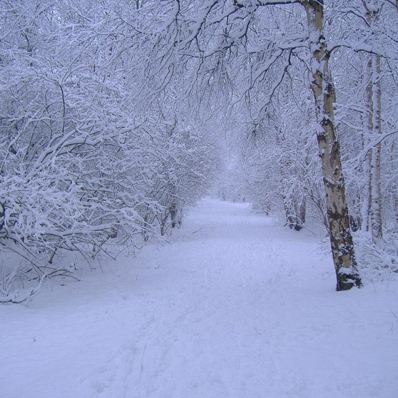 10 Latest Winter Scene Screensaver Free FULL HD 1080p For PC Desktop 2020 free download 434 winter scene wallpaper free 800x800