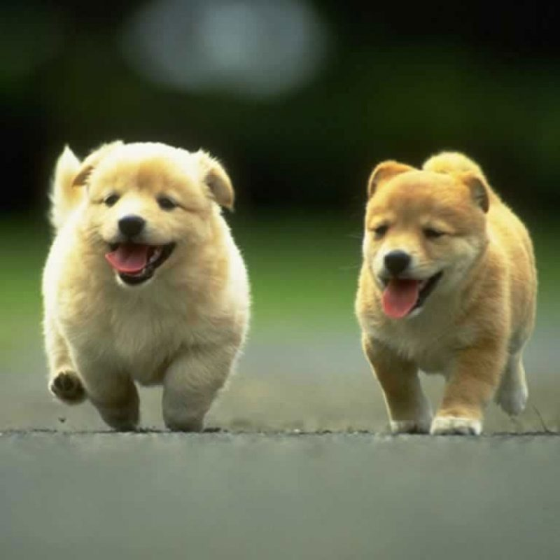 10 Top Cute Dogs For Wallpaper FULL HD 1080p For PC Desktop 2018 free download 45 cute dogs wallpapers top ranked cute dogs wallpapers pc hpw69 800x800