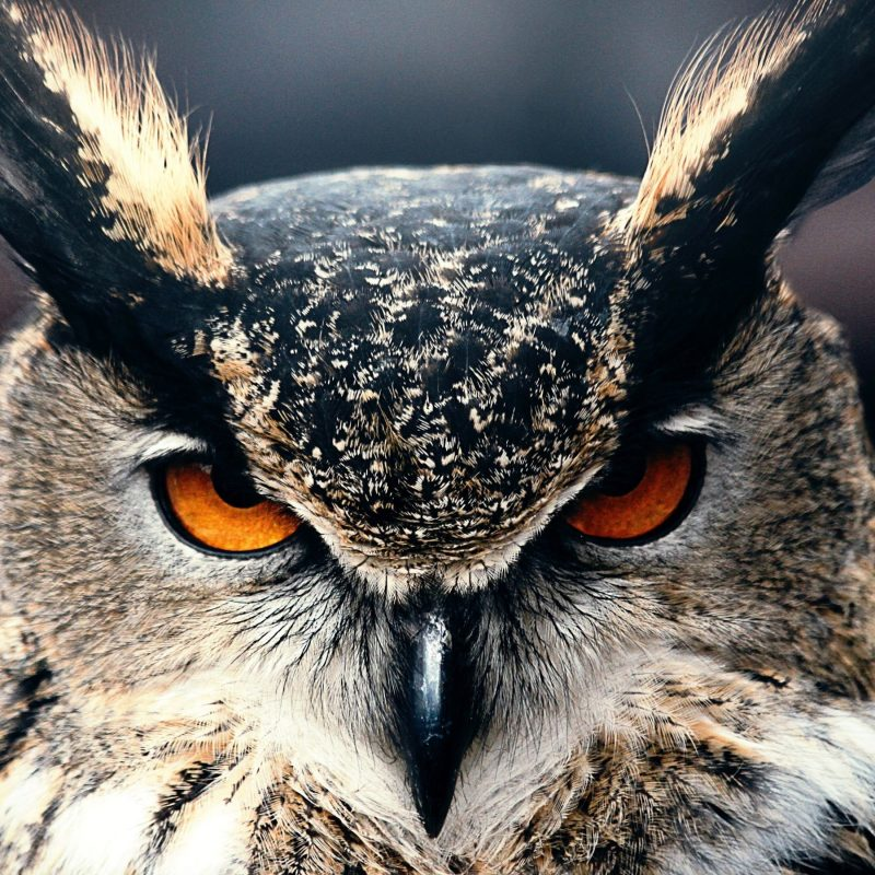 10 Top Owl Desktop Wallpaper Hd FULL HD 1920×1080 For PC Desktop 2018 free download 47 high quality owl wallpapers full hd pictures 800x800