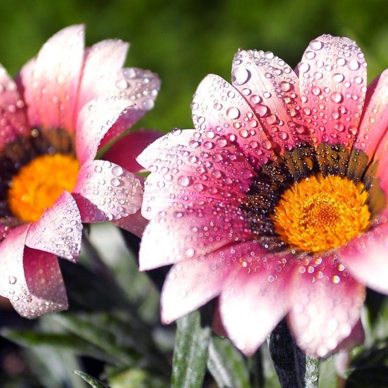 10 Best Flowers Wallpaper Desktop Background Full Screen FULL HD 1920×1080 For PC Desktop 2020 free download 5 nice flowers wallpaper desktop background full screen anaknulp 800x800