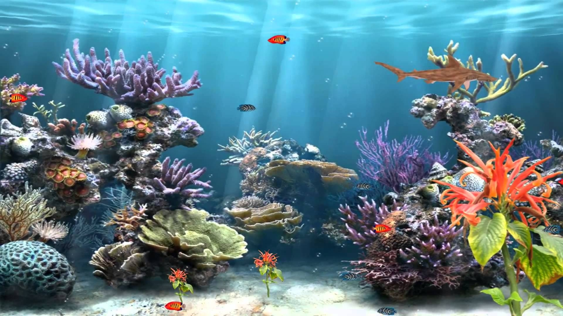 50+ best aquarium backgrounds to download & print | free & premium