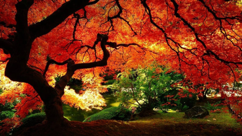 10 Latest Fall Scenes Wallpaper FULL HD 1080p For PC Desktop 2018 free download 50 fall scene wallpapers on wallpaperplay 1 800x450