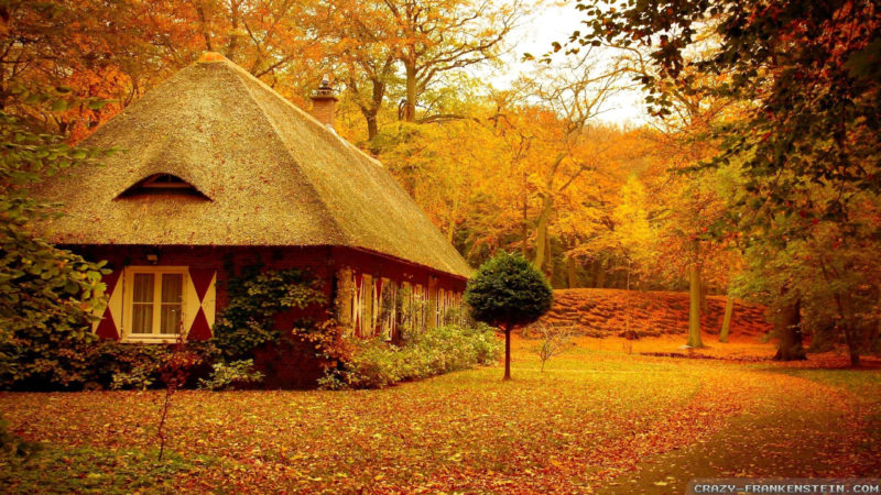 10 New Autumn Scenes Wallpaper FULL HD 1080p For PC Background 2018 free download 50 fall scene wallpapers on wallpaperplay 800x450