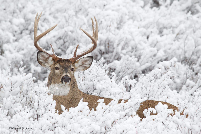 10 Best Whitetail Deer Desktop Background FULL HD 1920×1080 For PC Background 2018 free download 65 deer in winter snow wallpapers download at wallpaperbro 800x533