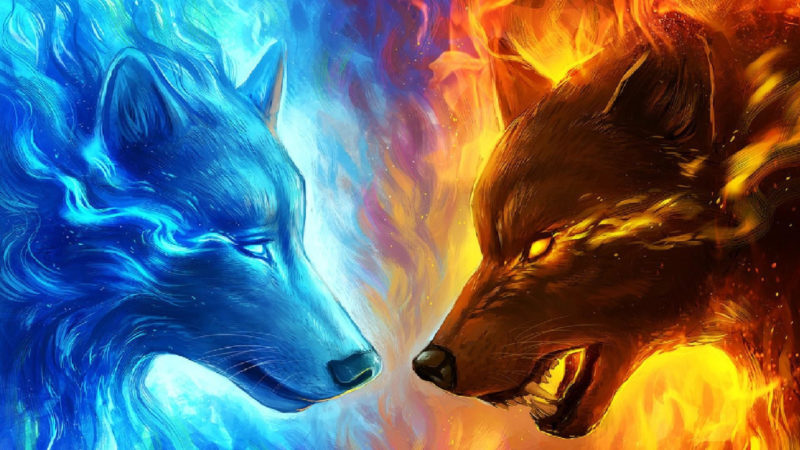 10 Top Cool Wallpapers Of Wolves FULL HD 1920×1080 For PC Desktop 2021 free download 66 fire wolf wallpapers on wallpaperplay 800x450