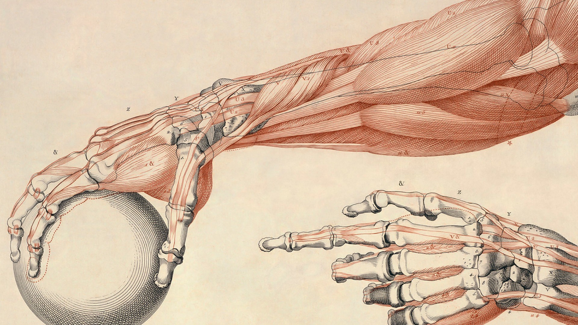 68+ human anatomy wallpapers on wallpaperplay