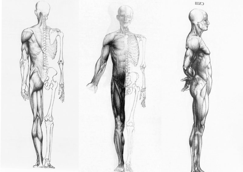 10 New Human Anatomy Wallpaper FULL HD 1920×1080 For PC Desktop 2020 free download 68 human anatomy wallpapers on wallpaperplay 3 800x567