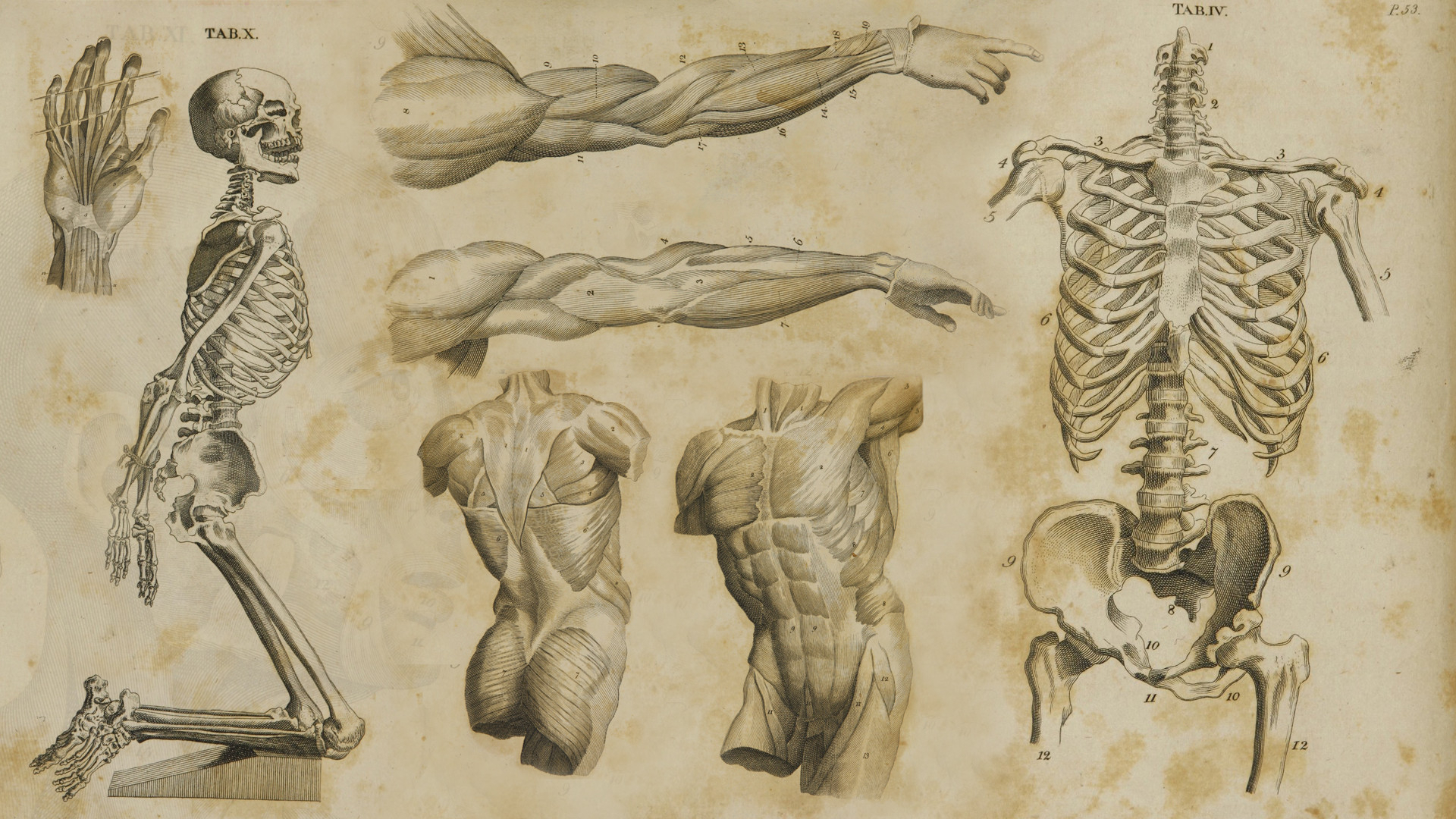 68+ human anatomy wallpapers on wallpaperplay