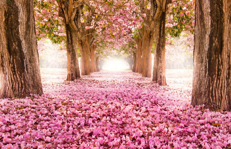 10 Best Hd Spring Wallpaper Backgrounds FULL HD 1080p For PC Background 2020 free download 7000x4520px spring wallpaper backgrounds hdstone stevenson 1 800x517
