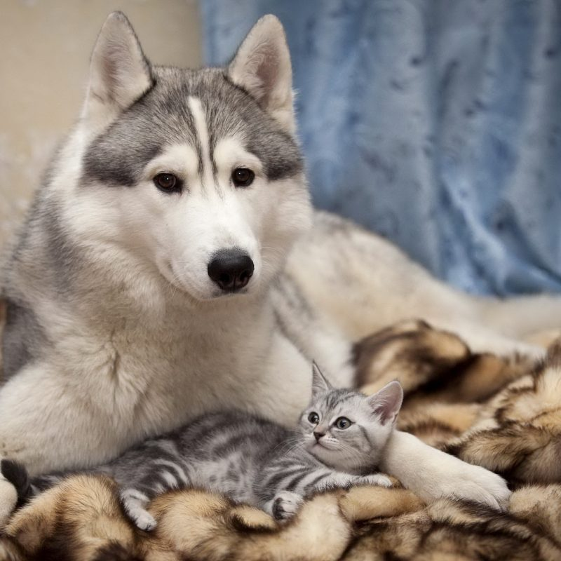 10 Best Dog And Cat Wallpapers FULL HD 1920×1080 For PC Background 2020 free download 95 cat dog hd wallpapers background images wallpaper abyss 800x800